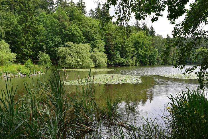 Naturlandschaft im Friedwald, Bad Sachsa